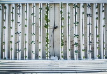 Best Hydroponic Tower in 2021— Buyer's Guide