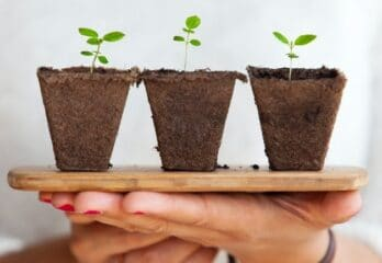 how to start germinating seeds