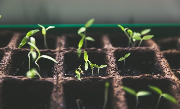 21 seedlings in a basket of plant growing for hydroponics system