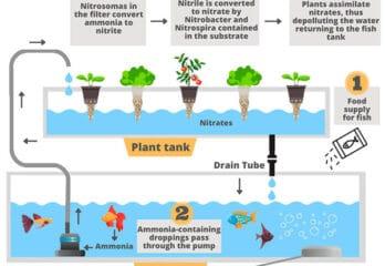 detailed diagram of the aquaponics system with description