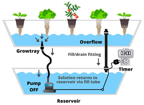 pump off Ebb and Flow Flood and Drain hydroponic system schema example