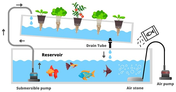 short aquaponics system schema