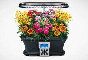aerogarden grow flowers