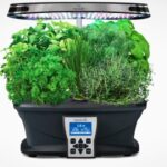 aerogarden grow herbs