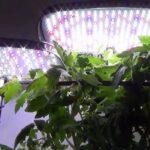 aerogarden grow light germination