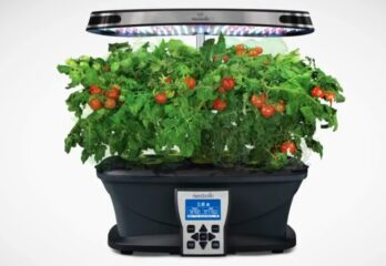 aerogarden grow tomatoes