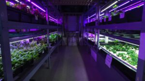 commercial hydroponics grow system