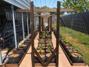 grow bags how to use in garden with clay pebbles