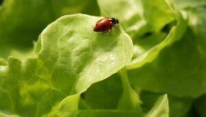 hydroponics growing system ladybug