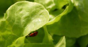 hydroponics growing system ladybug2