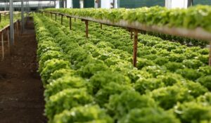 hydroponics growing system use 10x less water