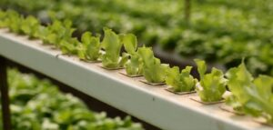 hydroponics growing tube
