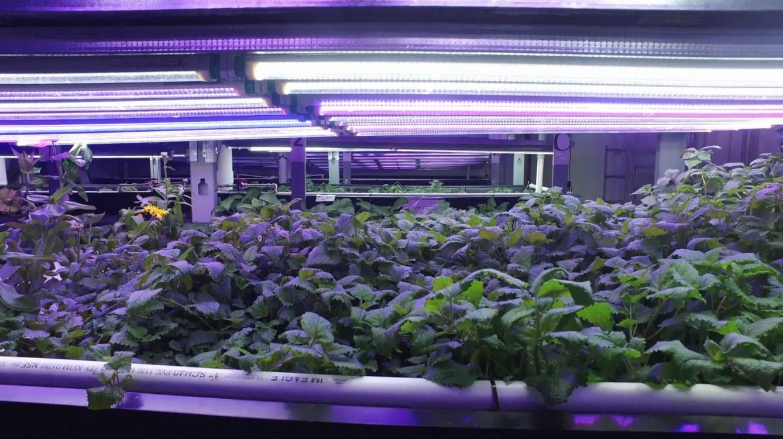 hydroponics light grow at home