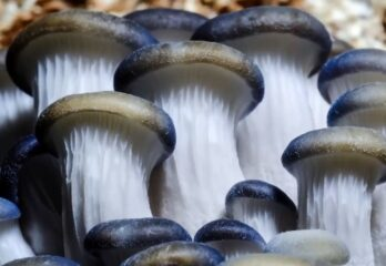 How to Grow Mushrooms in Grow Bags - Tutorial and Tips