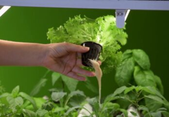 plant roots in a basket in a hydroponic system