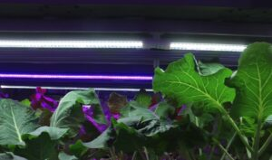 plant succulent leaves hydroponics grow system at home