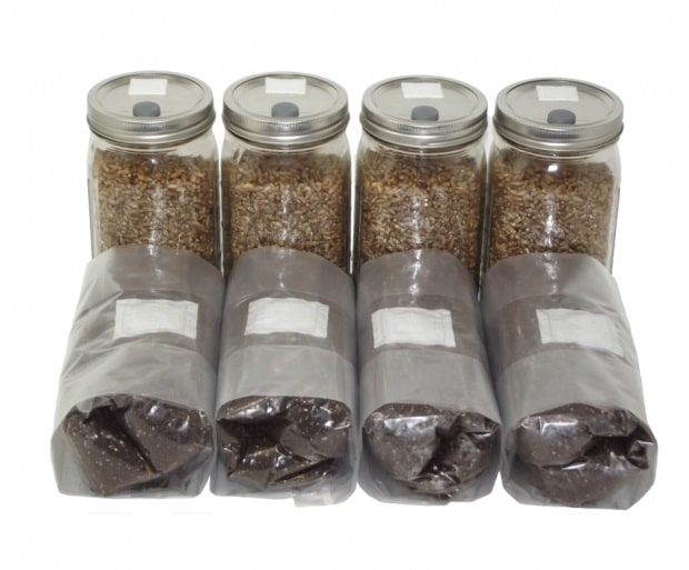 Out Grow Four Quarts Sterilized Rye and Four Pounds of Manure Based Substrate