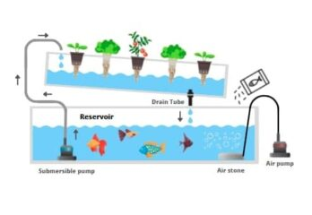 Hydroponic aquaponic systems grow fish and plants together