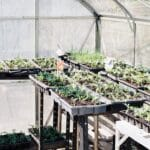 example growing plants in a greenhouse with CO2 Generator for Hydroponic
