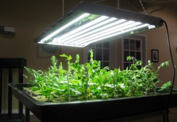 How to Use Hydroponic Light to Get the Best Results - Tutorial