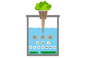 2 nutrient solution for hydroponic systems
