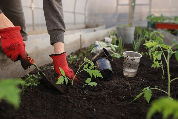 Growing Plants from seeds at home