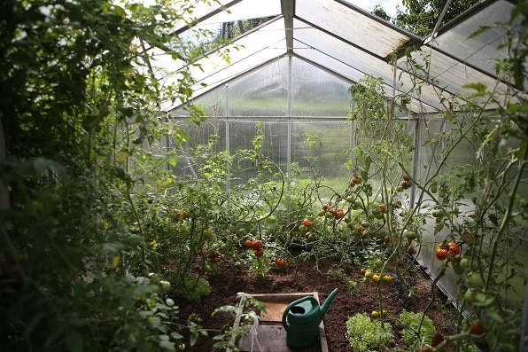 How to Grow Hydroponic Vegetables outdoors