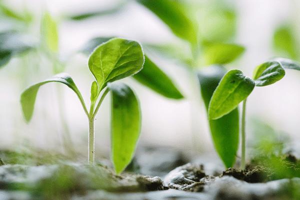 Vertical Herb Garden growing plants from seeds 4