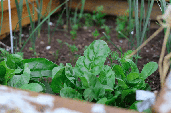 Indoor Vertical Herb Garden prepare plants example 3