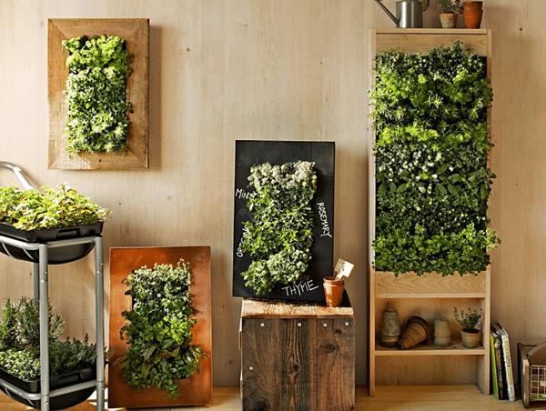 indoor vegetable garden growing hydroponic wall 3