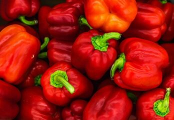 How to Grow Hydroponic Peppers: Easy Tips for Dummies – Tutorial
