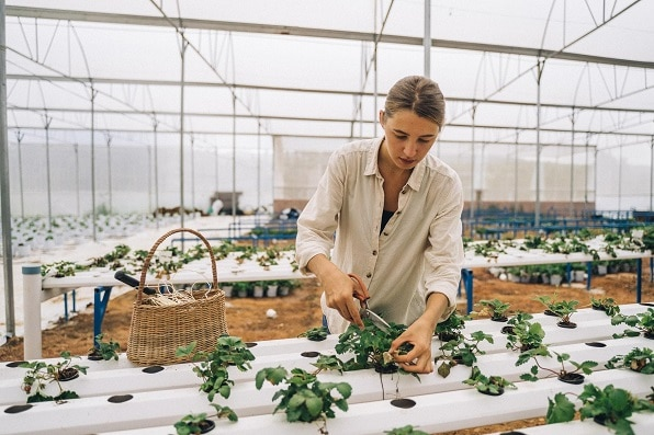 cropping Hydroponic Herbs with ebb and flow systems