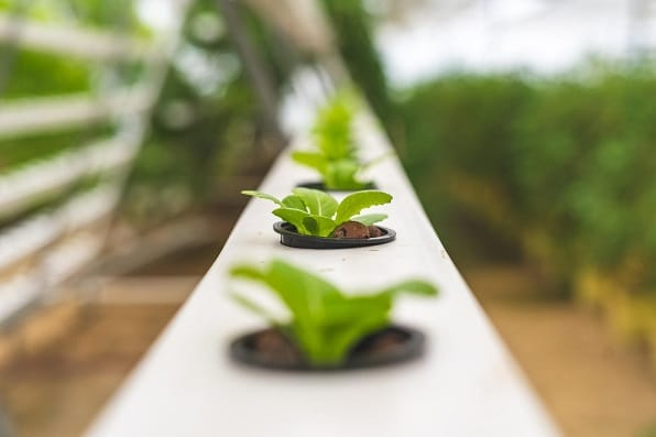 second Example to Grow Hydroponic Herbs with ebb and flow systems