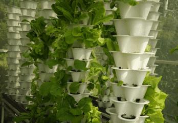 How to Use an Indoor Tower Garden – Tutorial