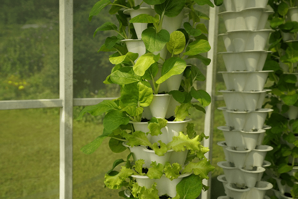 Indoor Tower Garden with leafy greens and herbs example