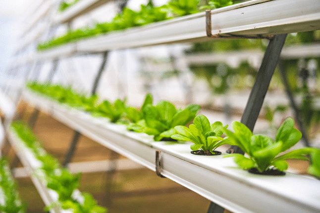 example nft system with Hydroponic Herbs